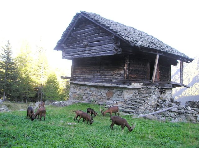 La maison de heidi