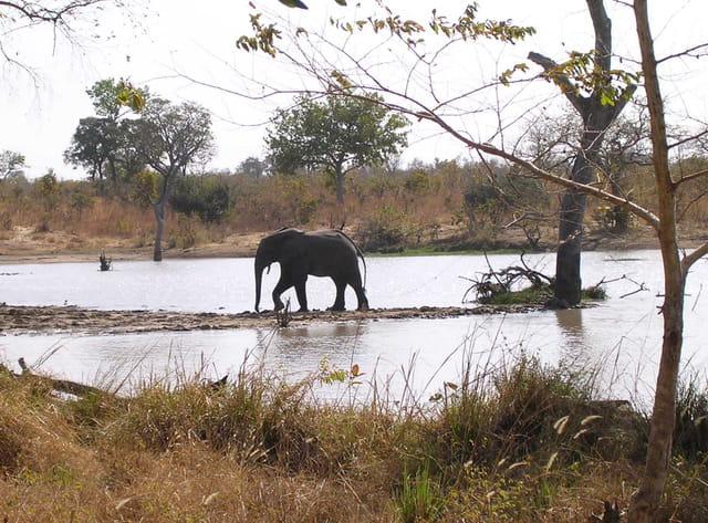 La mare aux éléphants 1