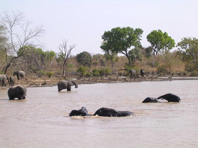 La mare aux éléphants 2