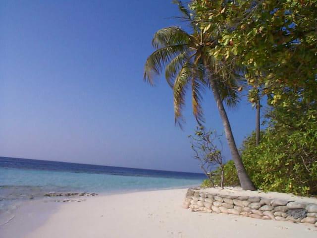 La mer, le sable, les palmiers