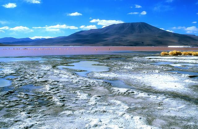 La merveilleuse Laguna Colorada...