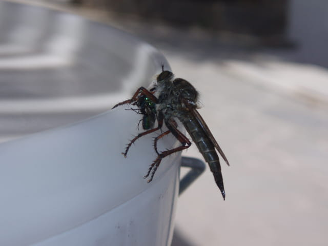 La mouche tueuse