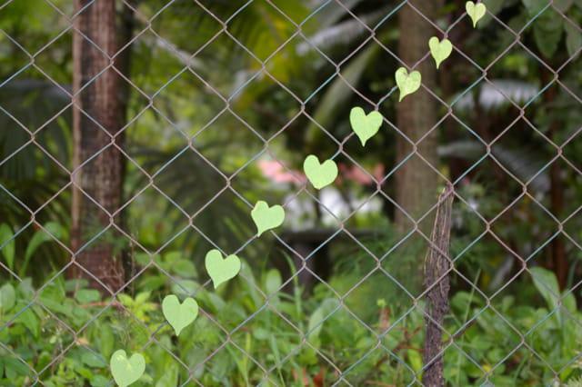La nature amoureuse