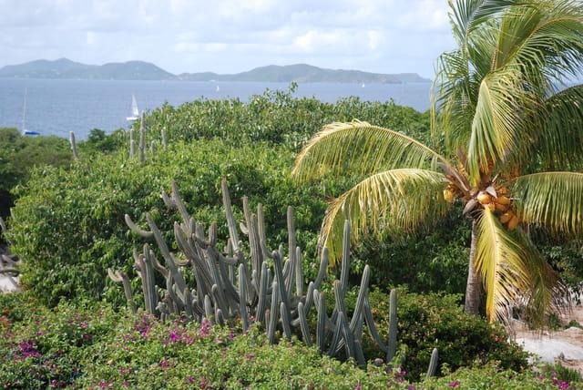 la nature exubérante de l'île Virgin Gorda