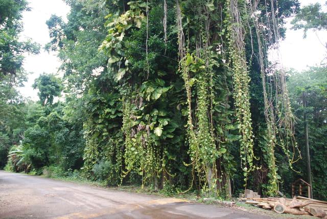 la nature tropicale dans la plantation Prospect