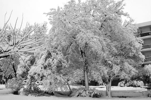 La neige suite et fin
