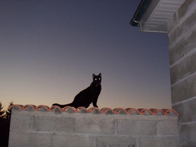 La nuit tous les chats sont gris...