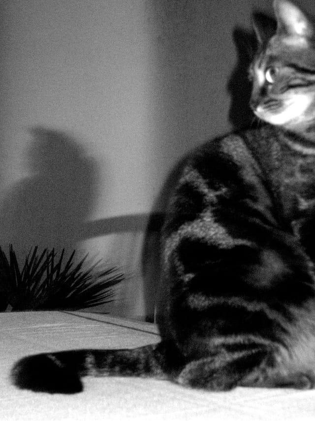La nuit tout les chats sont gris