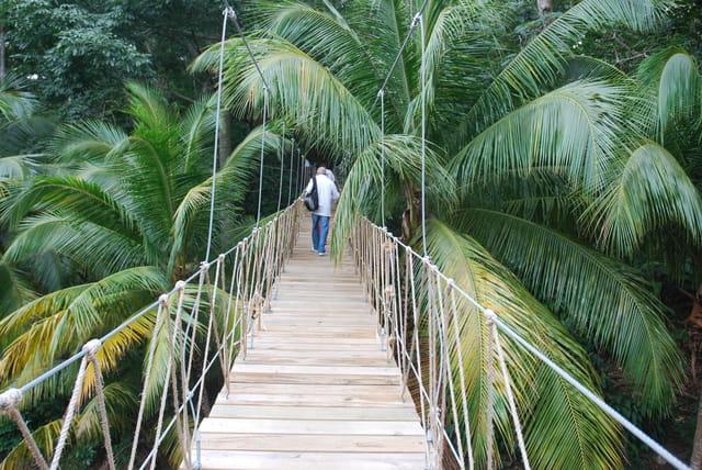 la passerelle dans la forêt tropicale