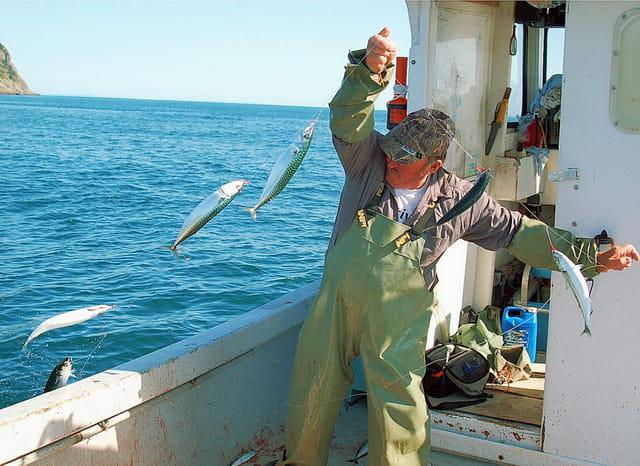 La pêche du maquereaux à la mitraillette