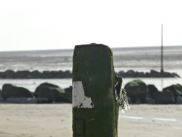 La plage a marée basse