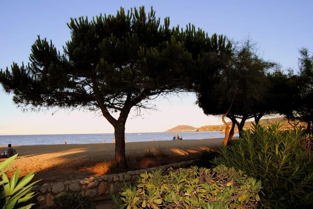 La plage d'Argelès - 4