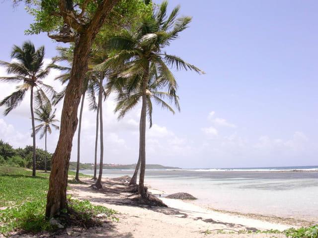 La plage de bois Jolan