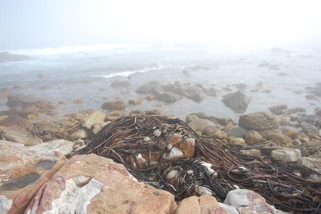La plage du Cap de Bonne Espérance