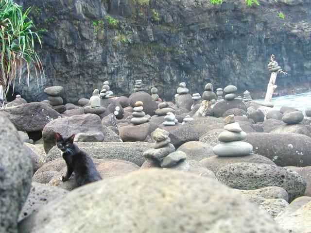 La plage du chat