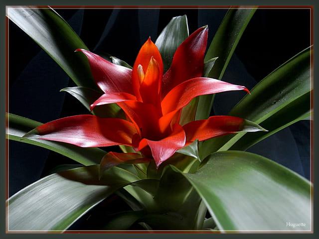 La plante de Janis