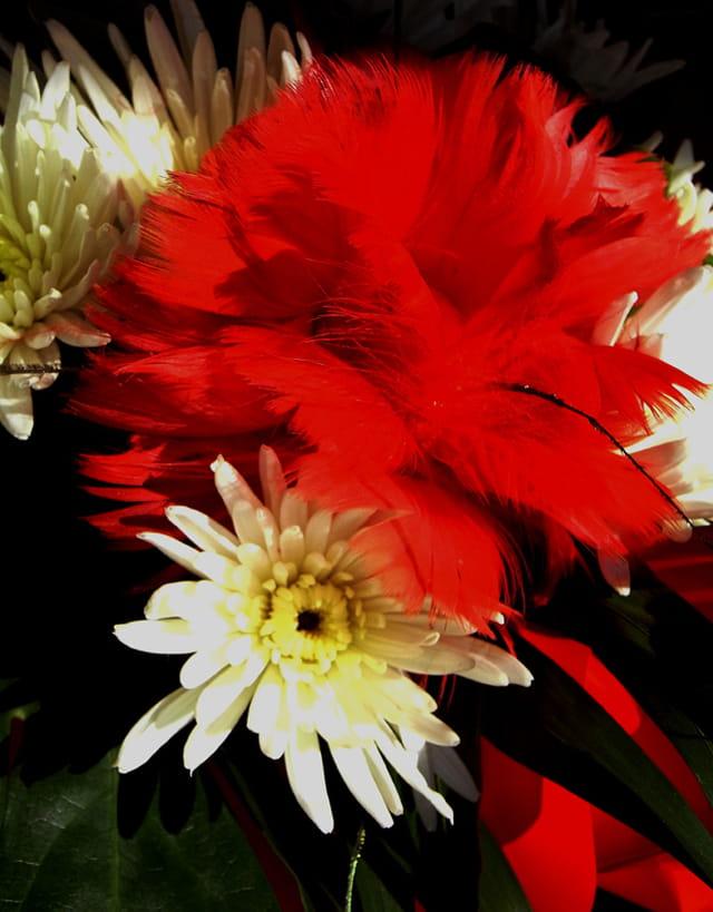La plume et es fleurs