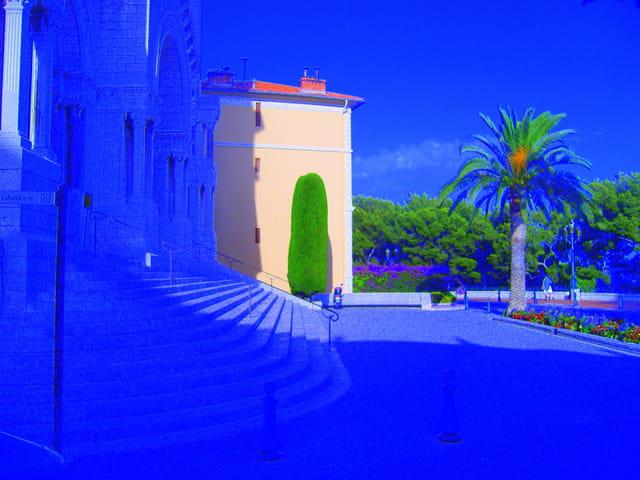 Le cyprès de Monaco