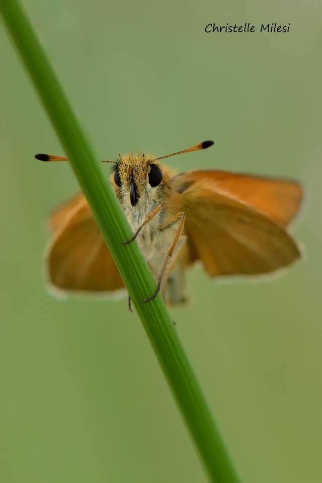La pose papillon