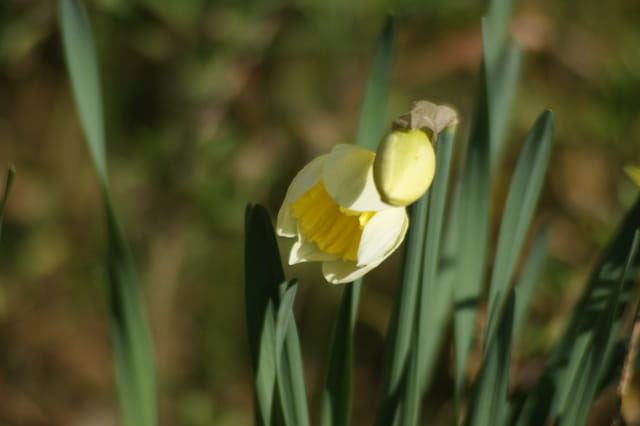 La primiere du printemps