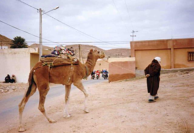 La promenade du chameau