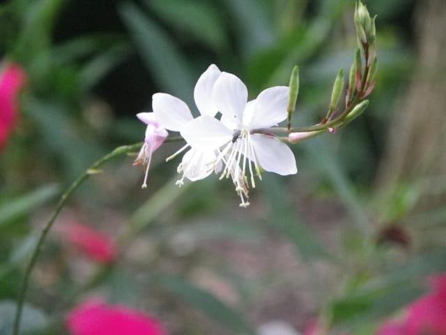 La pureté d'une petite fleur et sa petite habitante