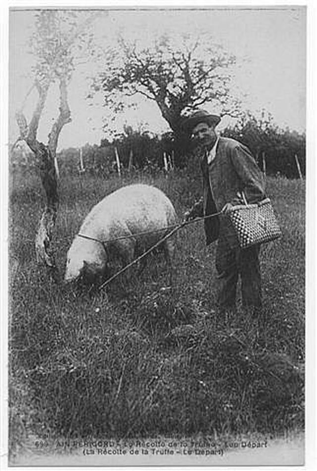 La récolte de la truffe