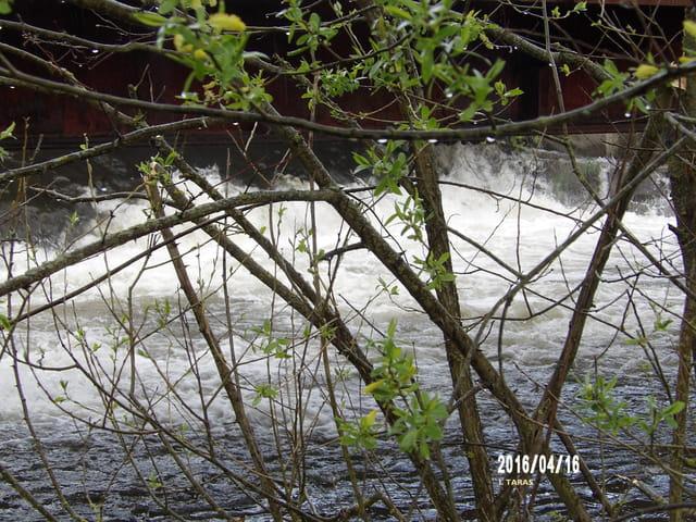 La rivière et ses arbres