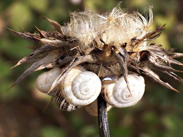 La ronde des escargots