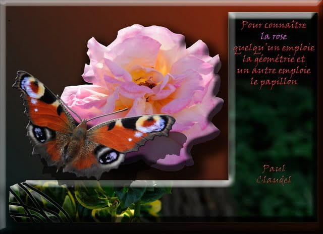 La rose et le papillon