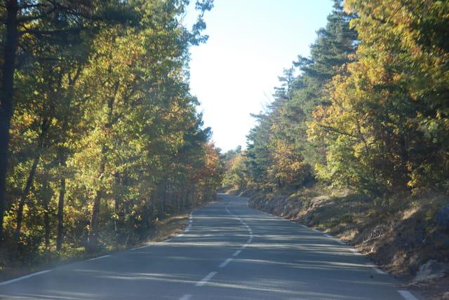 la route en automne
