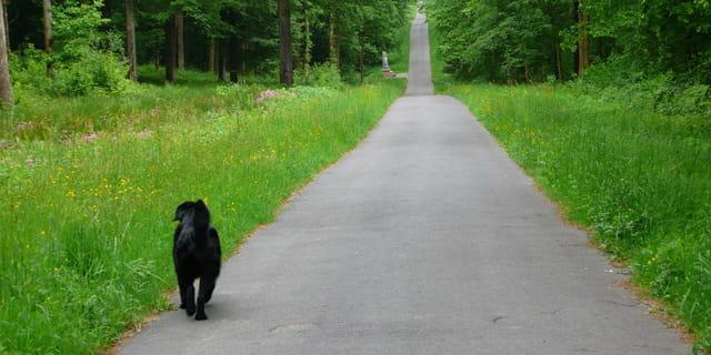 La Route vers le Ciel