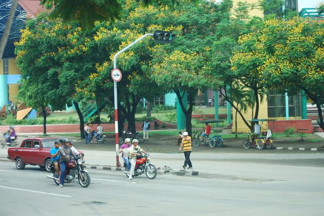 la rue aux arbres en fleurs