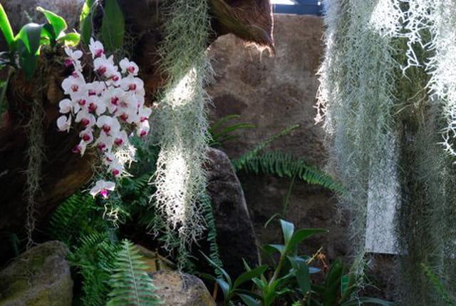 la serre du conservatoire botanique de Mascarin