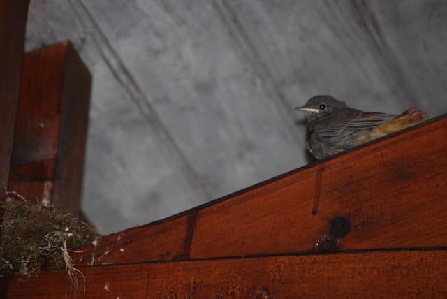 la sortie du nid