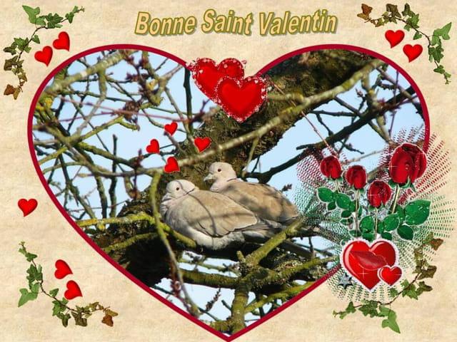 La St Valentin chez deux tourterelles