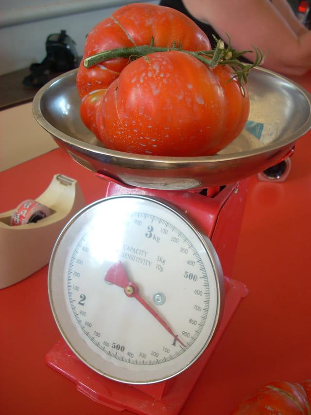 La star des tomates 2009