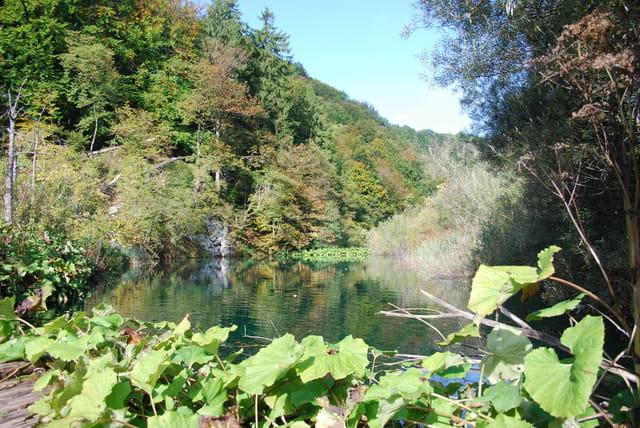 la végétation du Parc Naturel des lacs de Plitvice Jezera