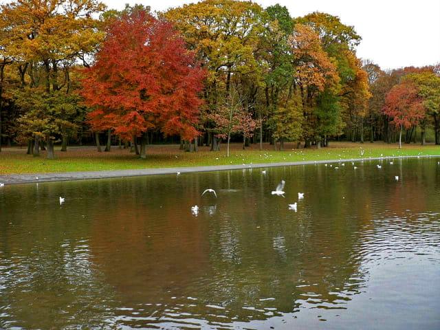 Lac artificiel,forêt de Montgeon