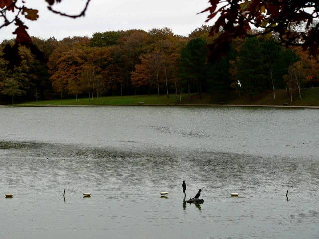Lac artificiel , forêt de Montgeon