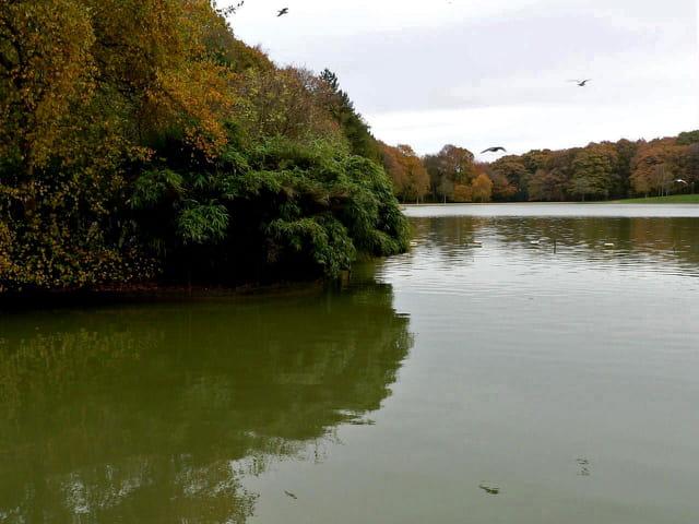 Lac artificiel, forêt de Montgeon