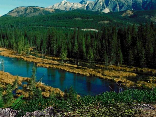 Lac et foret au canada