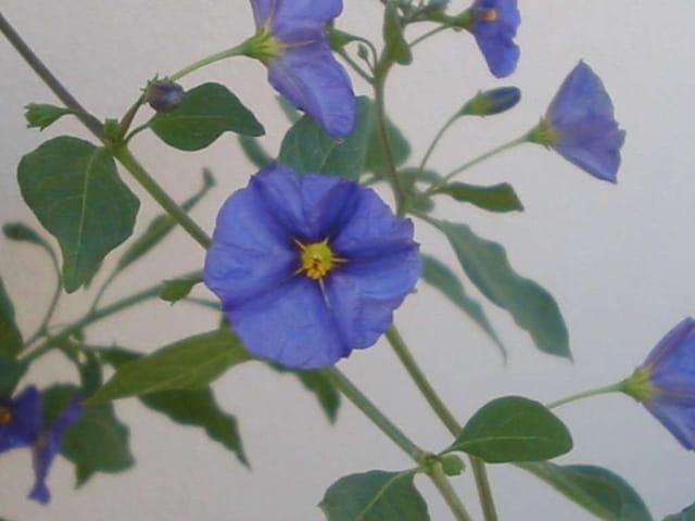 Laetitia rève en bleu