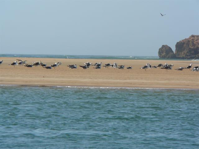 Lagunes à Oualidia