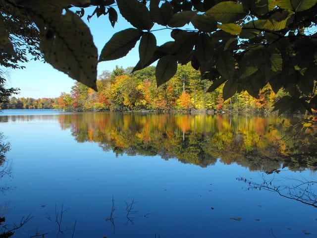 L'automne derrière les feuilles