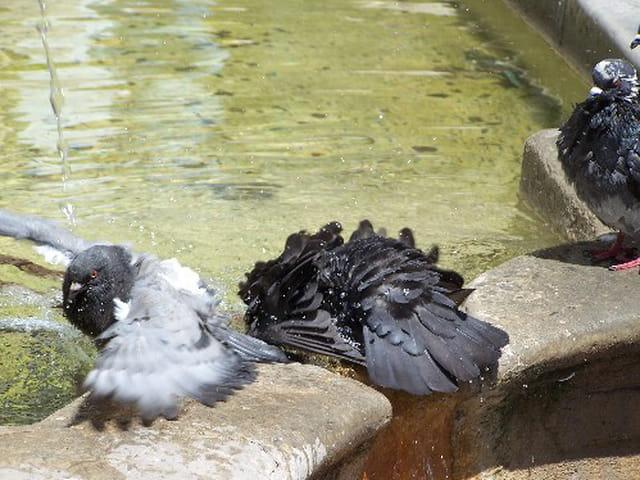 Le bar aux pigeons