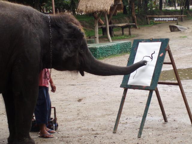 Le bébé éléphant peint son autoportrait