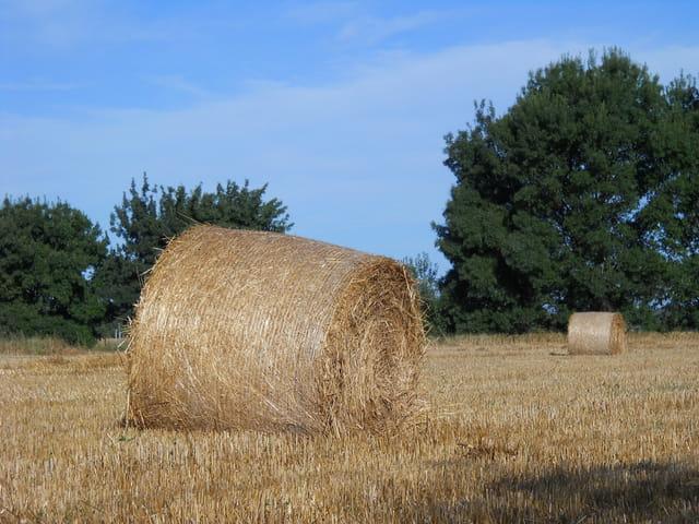 Le blé dans tous ses états...