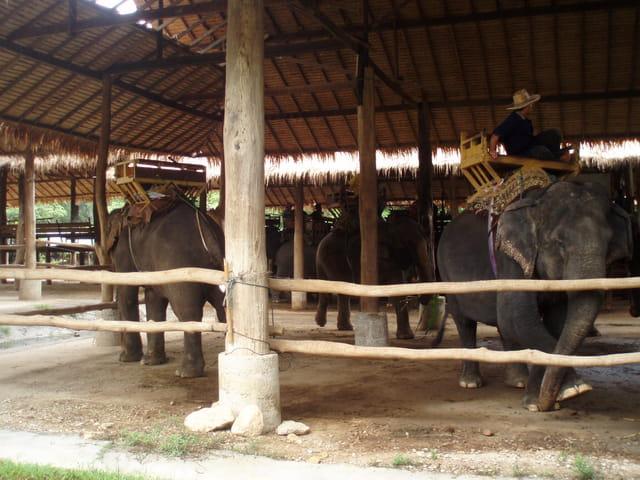 Le camp de travail des éléphants