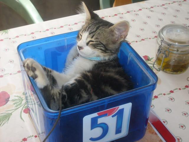 Le chat au repos
